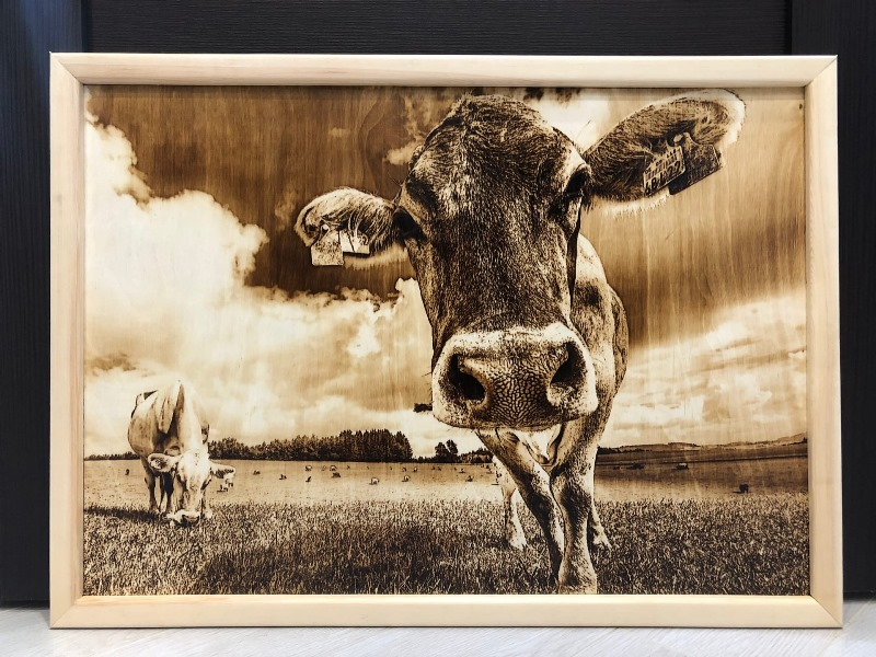 Pyrography cow